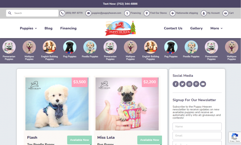 puppy-heaven-front-page-design