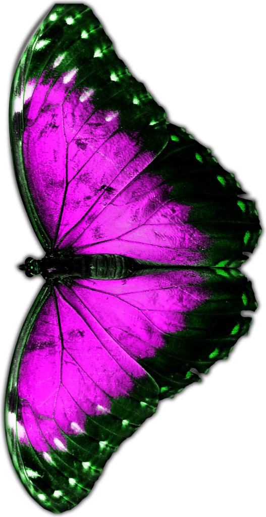 Pink Butterfly PNG by 702 Pros